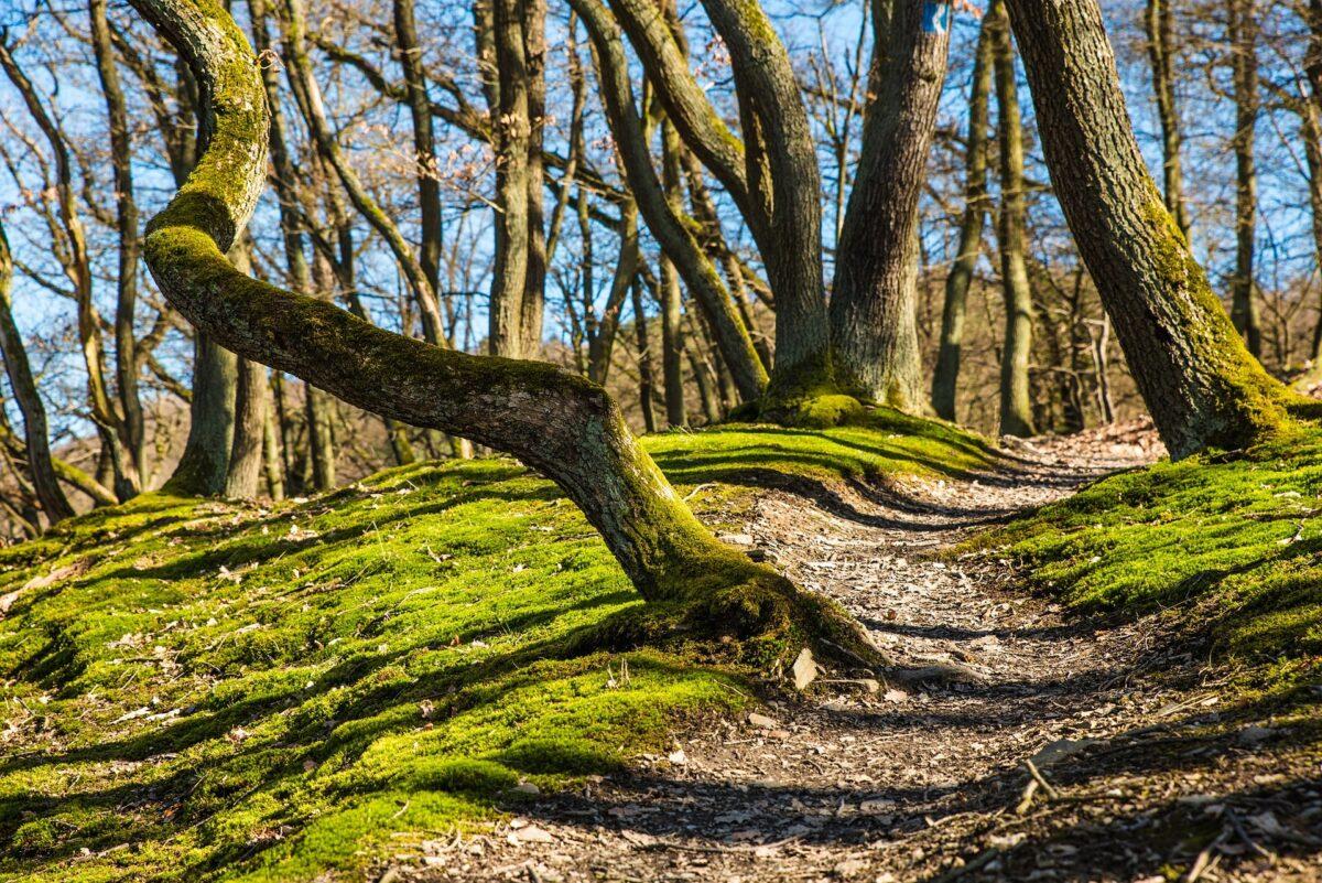 Ścieżka w lesie podczas wiosny